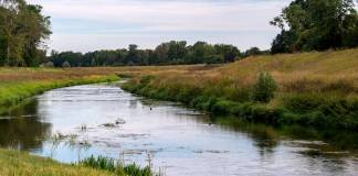 Targeted Ecosystem Restoration Can Protect Climate, Biodiversity