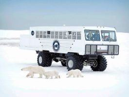 Tundra Buggy to go electric