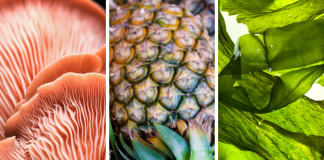 Lessons from 3 emerging bio-based material technologies