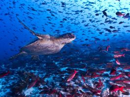 How marine protected areas help safeguard the ocean