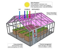 News Lighting Greenhouses can grow lettuce and generate solar power: study