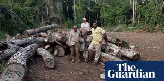 'Teeming with biodiversity': green groups buy Belize forest to protect it 'in perpetuity'