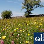 Wildlife charities raise £8m to boost nature schemes across England and Wales