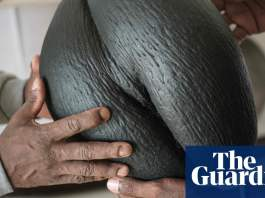 Nuts for coco de mer: islanders rally to save world's biggest seed
