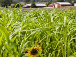 Regenerative Agriculture To Restore Our Earth