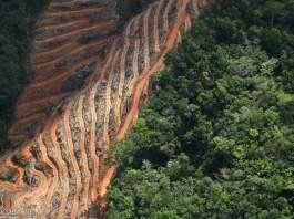 JPMorgan Chase expanding deforestation policies under shareholder pressure