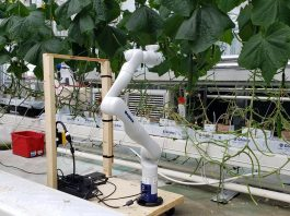 News Research Vegetables Partnership to advance automation for cucumber and mushroom growers