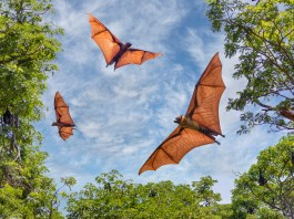Role of Bats in Our Ecosystems: There 3 Main Benefits
