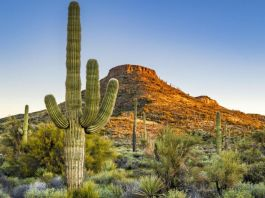Fashion Company Is Making Products With Mexican Cactus