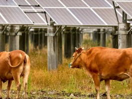 Organic Valley loans dairy farmers funds for renewable energy