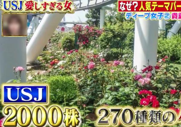 日本テレビUSJ今夜くらべてみました