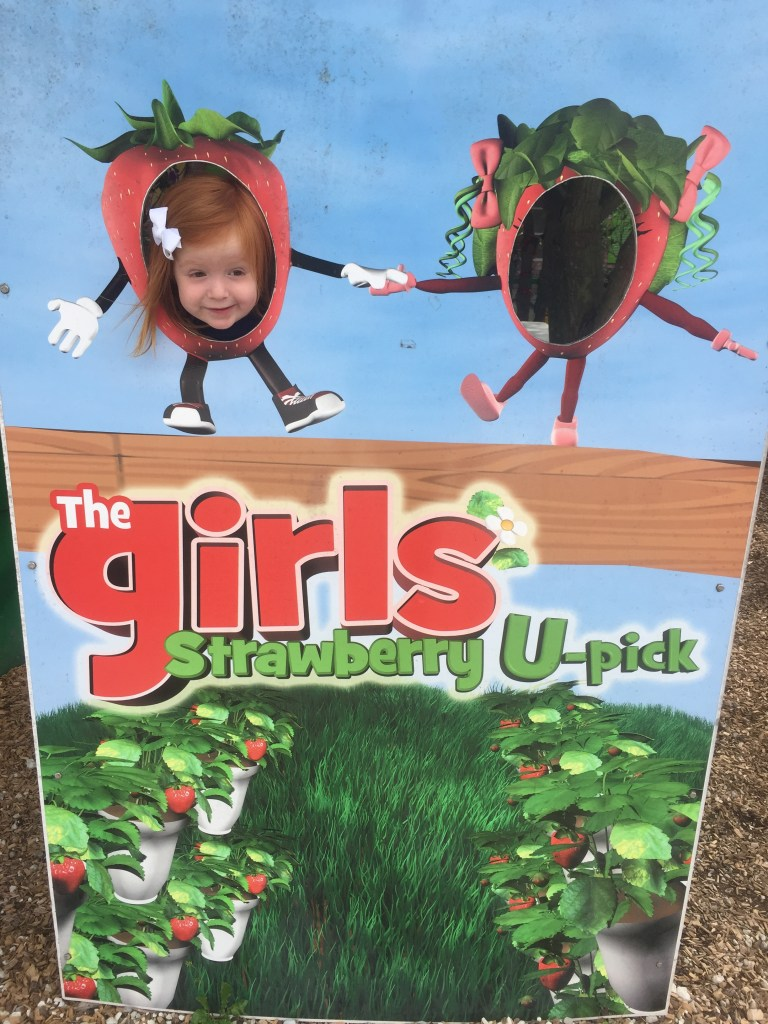the girls strawberry patch, the girls strawberry, strawberry patch delray beach, The Girls Strawberry U-Pick