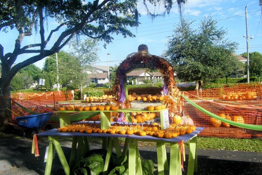 Our Favorite Pumpkin Patches in South Florida by Happy Family Blog