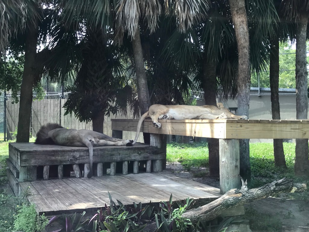 The Naples Zoo