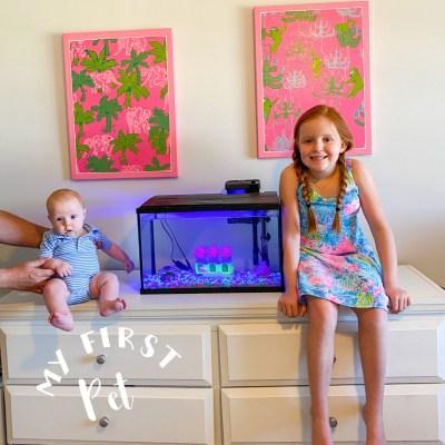How to set up a fish tank How do you set up a fish tank How do I set up a fish tank How do I set up my fish tank