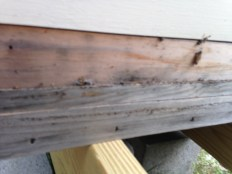 Tiny black ants nesting between the bottom boards.