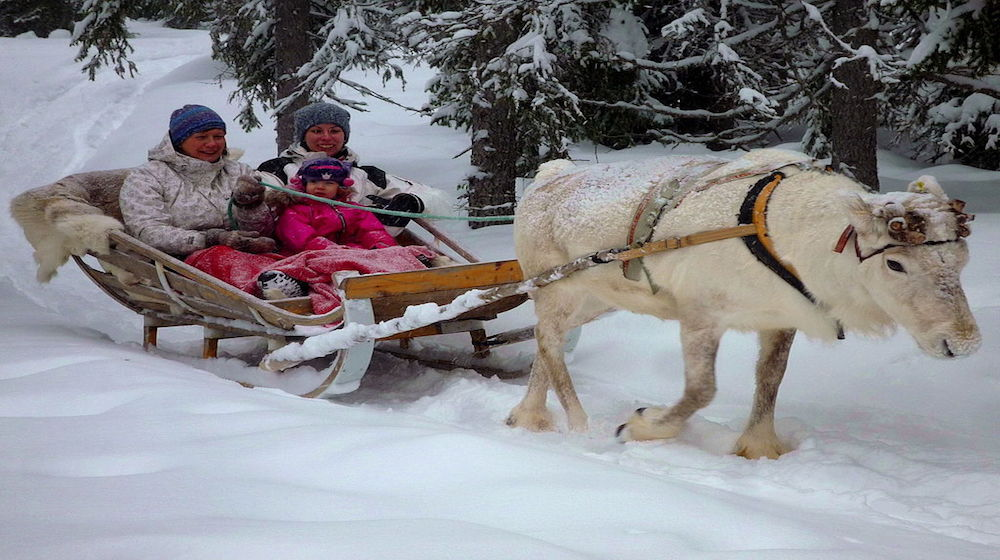 Happy-Fox-Acrtic-Adventure-Winter-Highlights-reindeer-sled