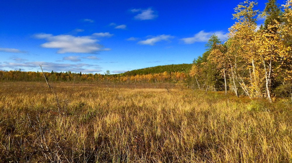 Happy-Fox-Fall-Colors-and-Landscapes-forest-farm-swamp-white-and-blue-sky-s