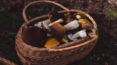 Happy-Fox-Goods-of-the-Forest-mushroom-basket kopio