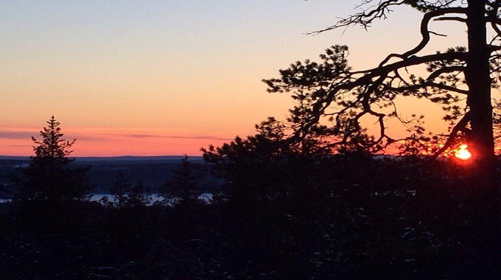 Happy-Fox-Trip-to-the-Nightless-Night-red-sunset-behing-pine