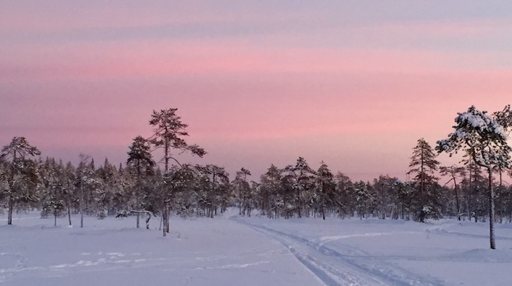 Happy-Fox-Winter-Forest-red-sunset-and-swamp