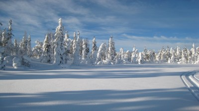 Happy-Fox-Winter-Forest-snowy-forest kopio
