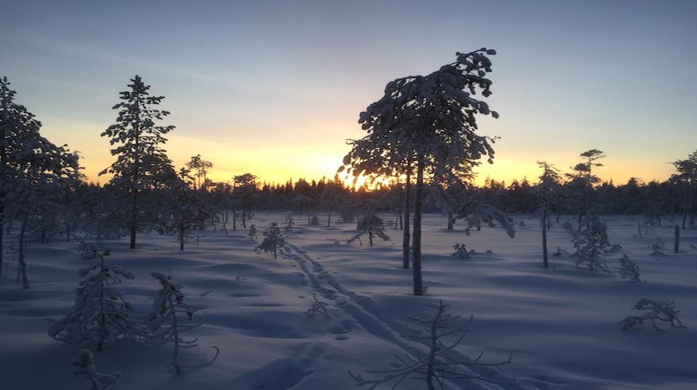 Happy-Fox-Winter-Forest-yellow-sunset