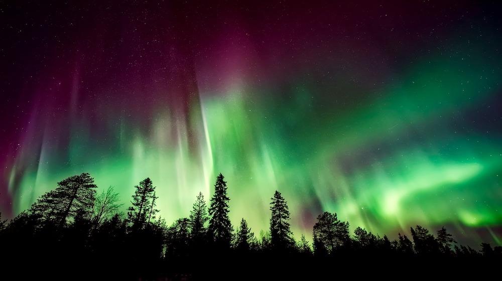 Happy-Fox-aurora-adventure-on-the-ounasjoki-river-aurora-on-trees