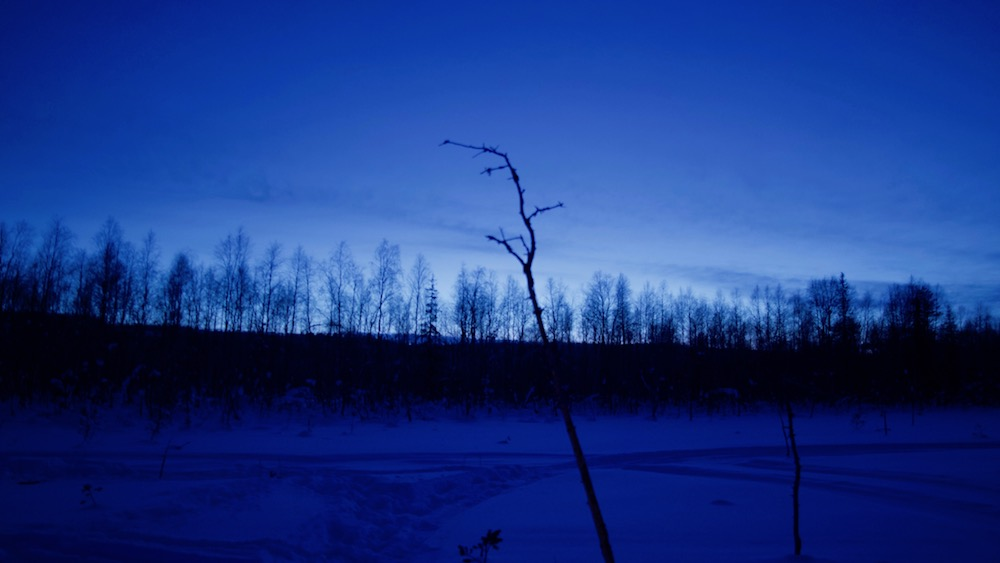 Happy-Fox-Arctic-Dark-Forest-Adventure-blue-moment-p