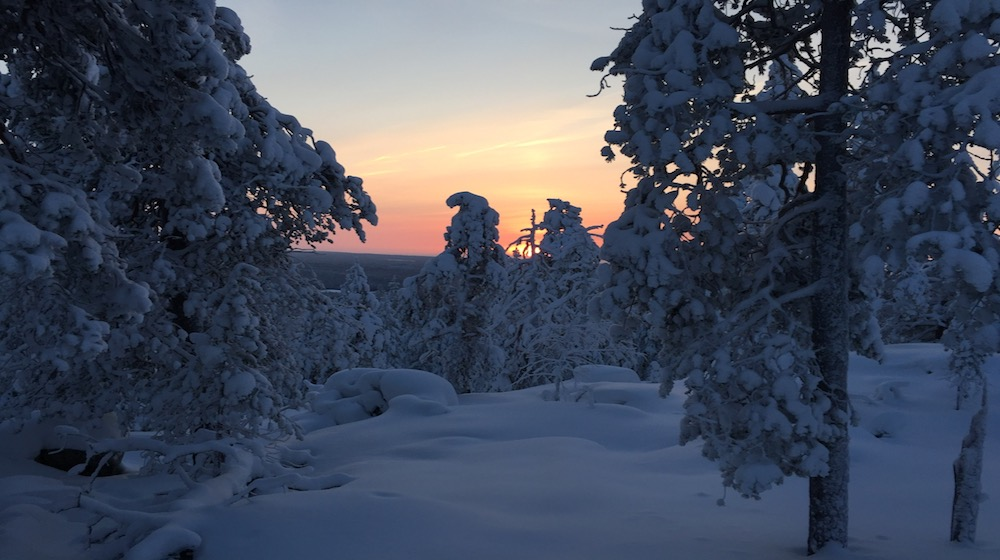 Happy-Fox-Arctic-picnic-and-forest-walk-nuuksvaara-hill