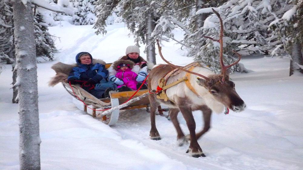 Happy-Fox-Arctic-reindeer-adventure-grey-reindeer-sled-ride