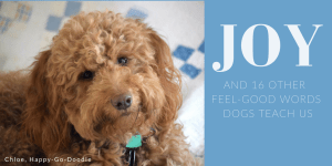 Red goldendoodle dog with head tilted and title Joy and 16 Other feel-good words dogs teach us