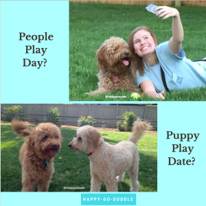 Photo of red goldendoodle and blonde-headed girl taking a selfie, photo of two golden doodles