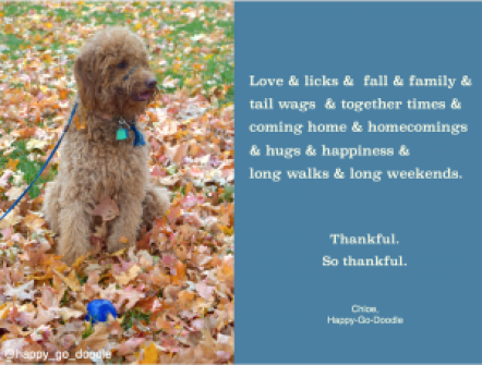 Quotes about fall with red goldendoodle dog sitting in fall leaves with blue ball and original quote by j. carl about thanksgiving and blessings