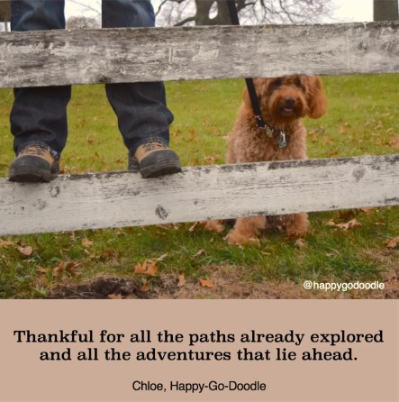 Red goldendoodle dog peeking through a wooden fence with quotes about fall adventure