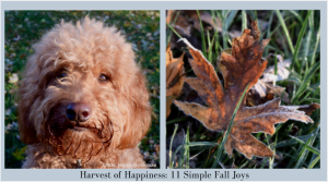 Photo of Red goldendoodle dog and red fall leaf