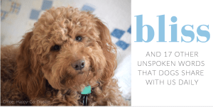 Close-up of red goldendoodle smiling face with title bliss and words dogs teach us