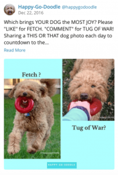 Instagram post with fetch and tug of war photos