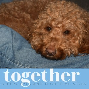 Red goldendoodle dog sleeps on blue jean leg with quote about togetherness on blue background