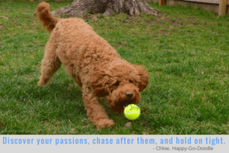 Red goldendoodle dog, Happy-Go-Doodle, fetching a yellow tennis ball and inspirational and motivational quote