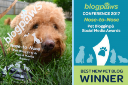 Happy-Go-Doodle Chloe peeks through the clear glass trophy for Best New Pet Blog Won at the 2017 BlogPaws Conference