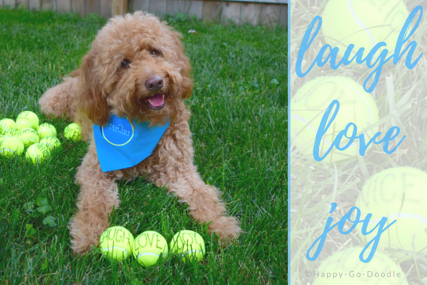 Happy-Go-Doodle Chloe, a red goldendoodle dog wearing a blue dog bandana, sits in green grass with tennis balls that read laugh love joy