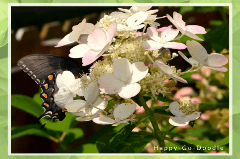 Butterfly hidden in flowers inspires a blog