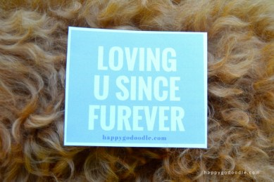 Quote reads LOVING U SINCE FUREVER and is surrounded by curly red dog hair