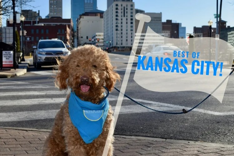 "Red goldendoodle dog with tour guide flag that read ""best of Kansas City"" and Kansas City skyline in background of photo"