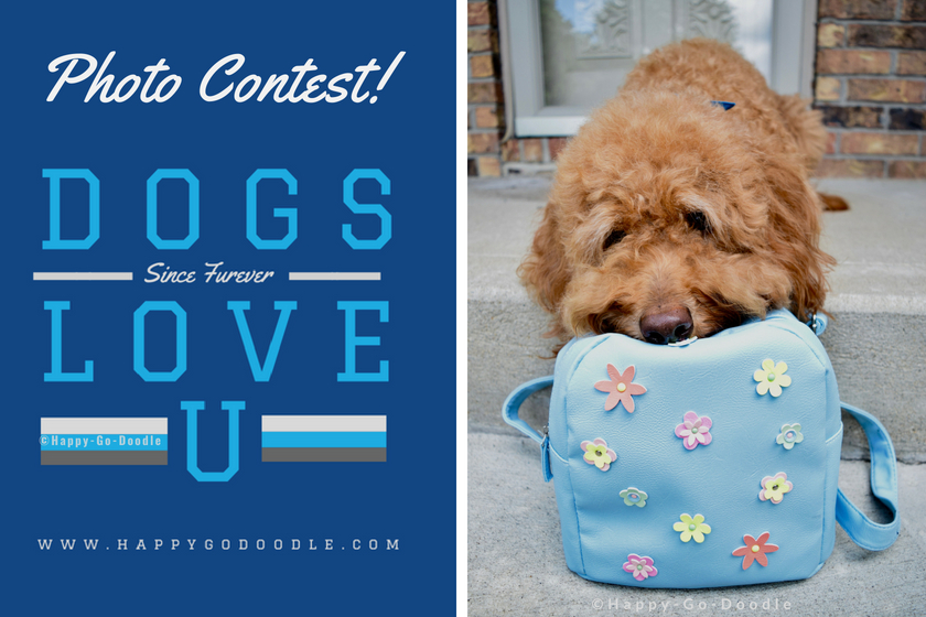 goldendoodle dog with head resting on backpack and title photo contest and logo dogs love u and website www.happygodoodle.com