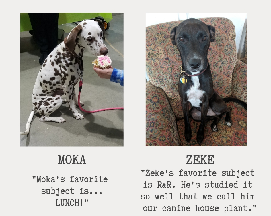 two very cute dogs named moka and zeke both are black and white