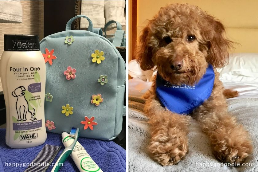 backpack and Wahl Pet Shampoo beside red goldendoodle dog