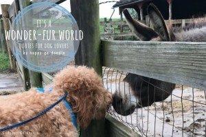 red goldendoodle dog touching noses with donkey and title it's a wonderful world quotes for dog lovers by happy-go-doodle