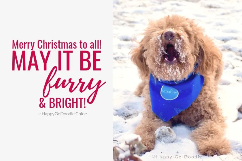 red goldendoodle dog and ending to the night before christmas merry christmas to all may it be furry and bright